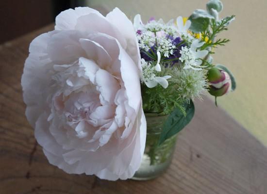 6月開花の花 ボタン