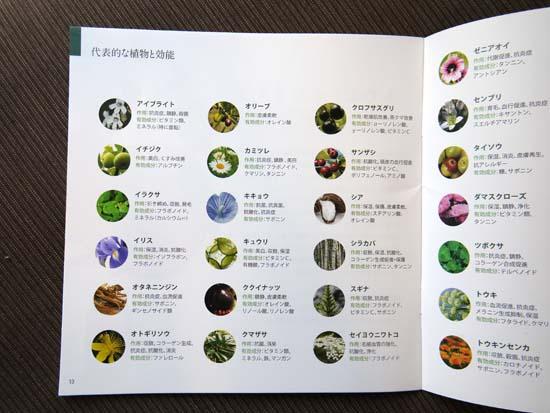 オラクルの植物成分
