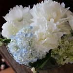 シミを消して白い肌になりたいな 5月開花