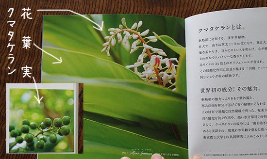 アルファピニ28 クマタケラン 口コミ体験談 ブログ